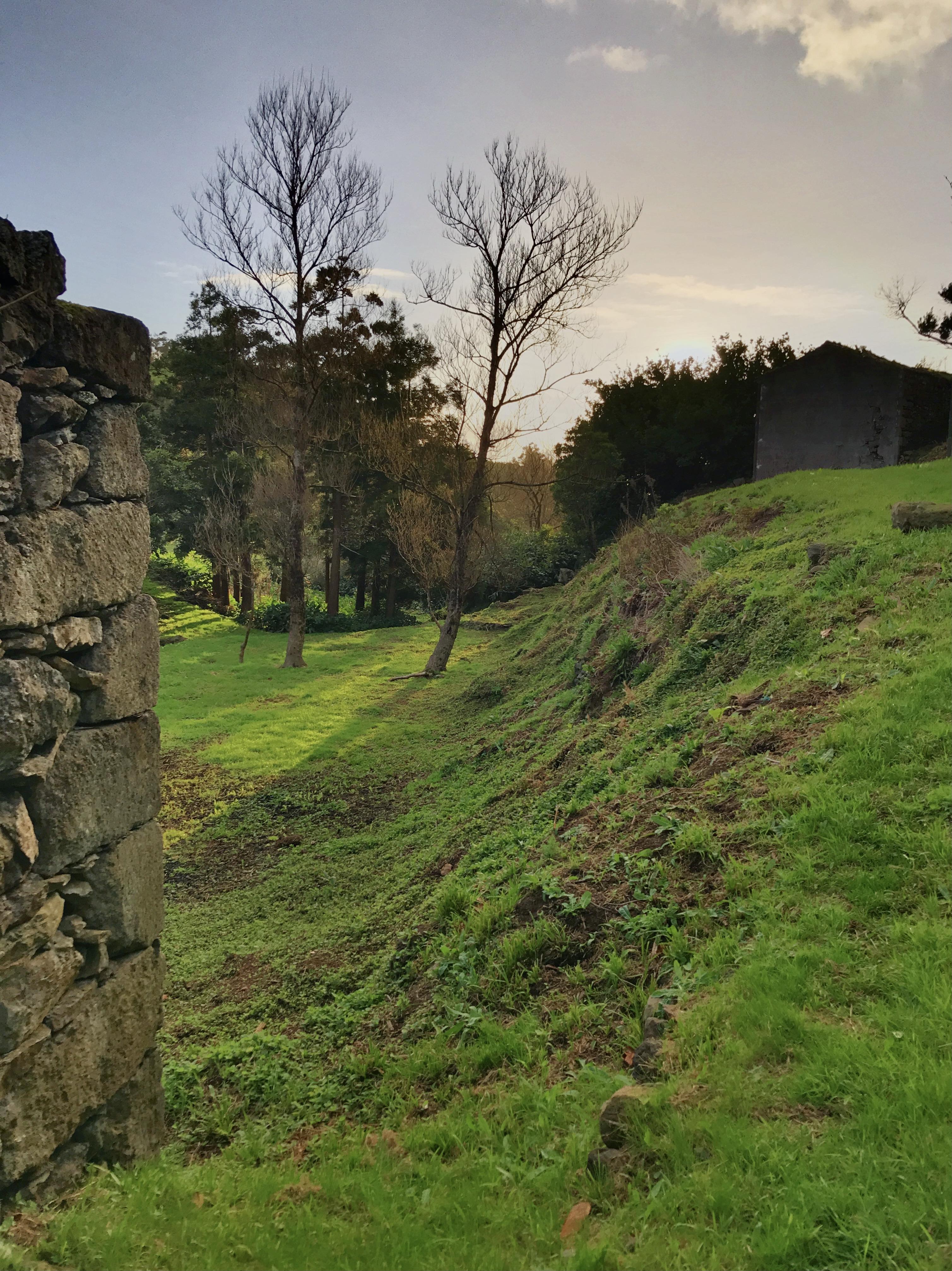 Casa dos Corções and poplars