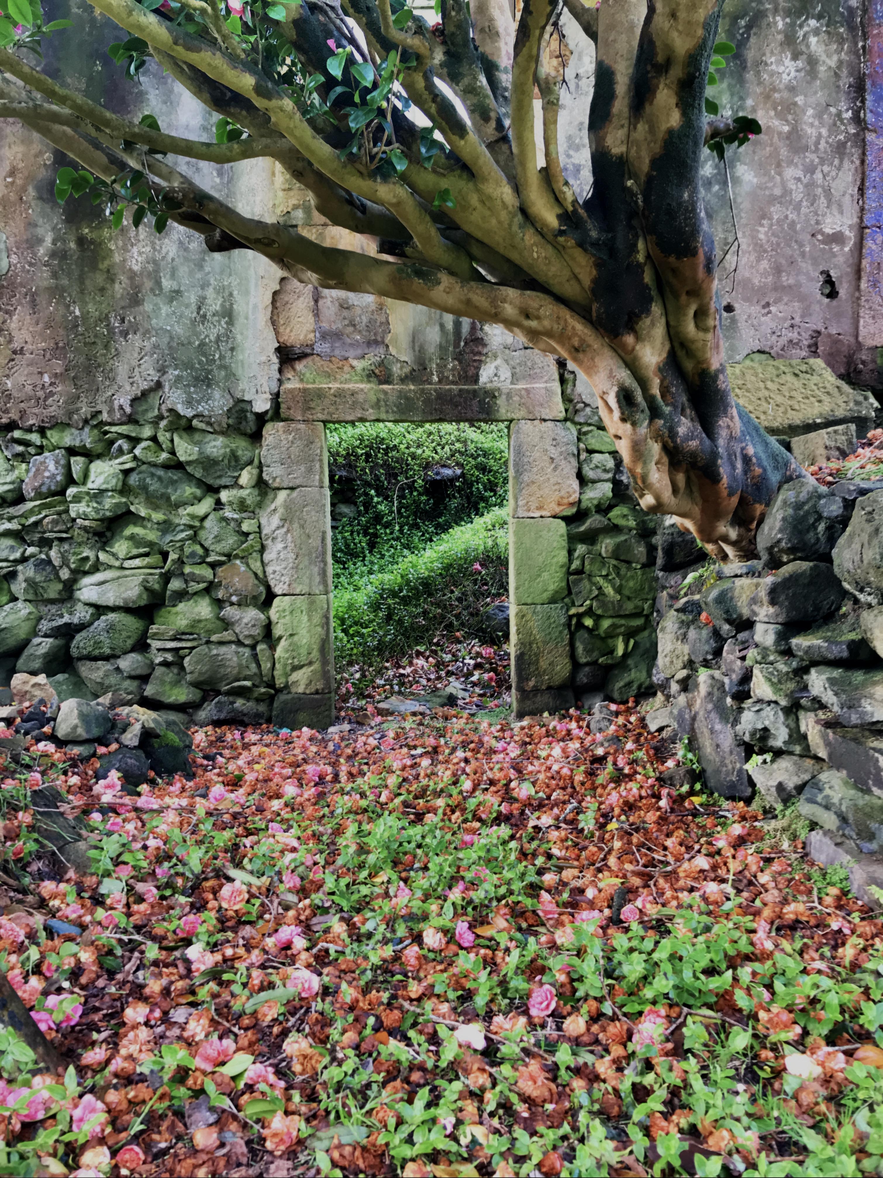 Porta da Casa das Flores com japoneira