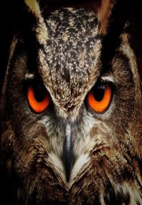 Animal tótem - Búho