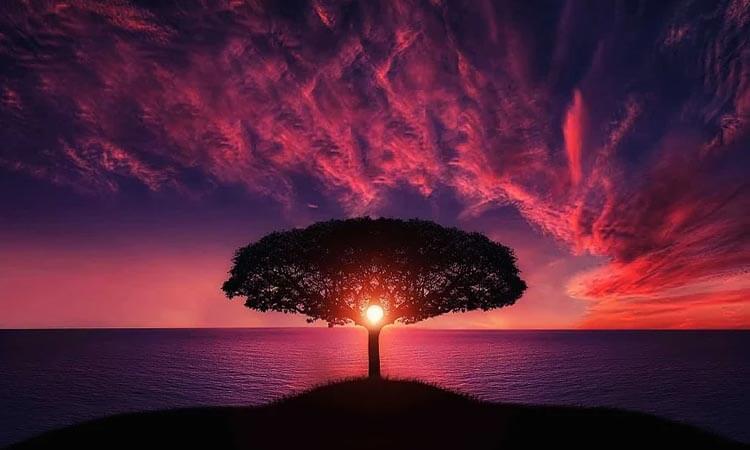 Día del árbol - Árbol con atardecer de fondo