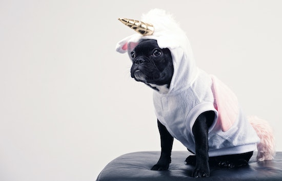 Small dog in a unicorn costume. No matter how cute a dog may look to many, dogs can trigger immense fear with subsequent avoidance and panic. Get anxiety and phobia treatment in California or online anxiety counseling in Montana here.