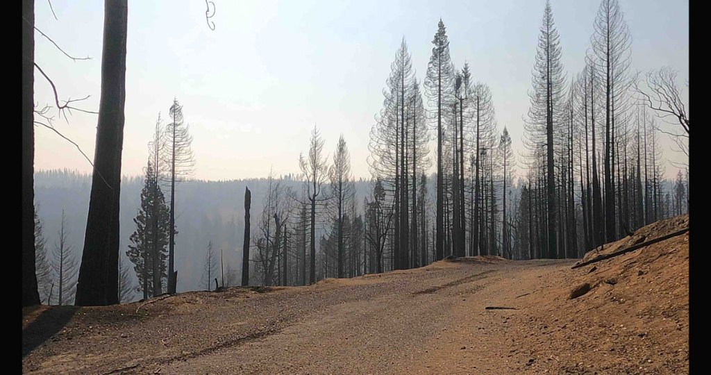 California forest after wildfire