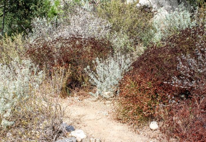 guide mycorrhiza weed control