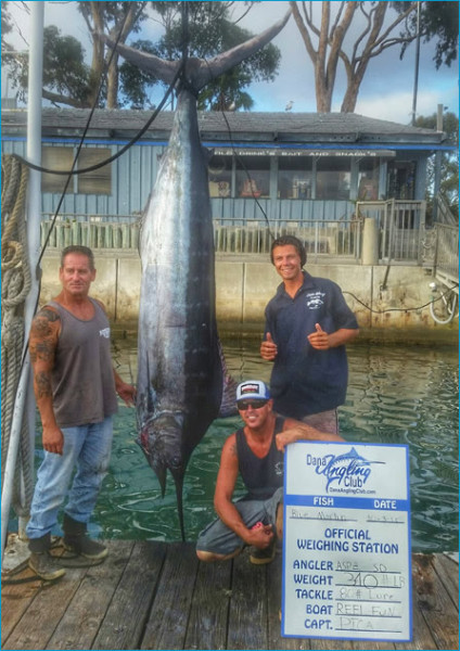430-pound blue marlin caught on the Reel Fun with Capt. Chris Pica