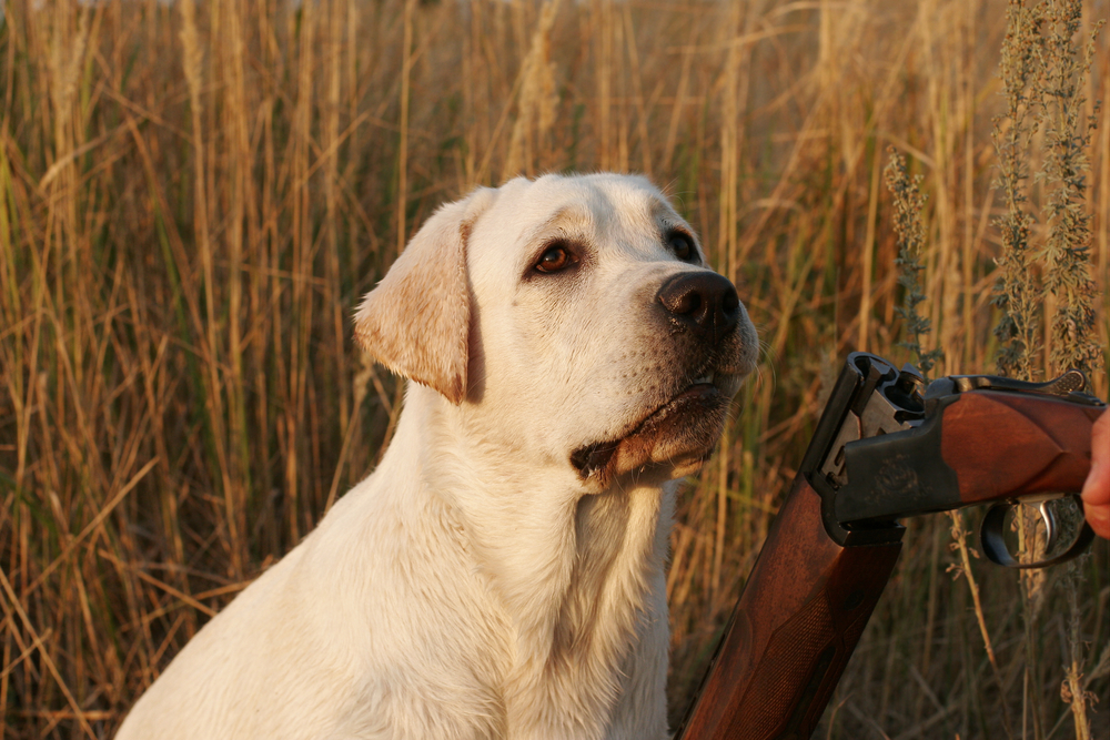A History Of Hunting Dogs