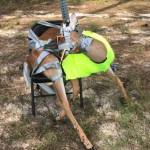Georgia DNR looking for leads on Poached Duct Taped Deer to a Sign