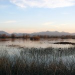 $17.9 Million Grants Approved To Restore Fish And Wildlife Habit