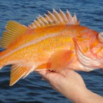 Groundfish Limits Increase Could Be A Boon For West Coast Fishing