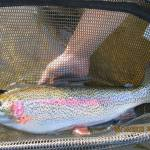 UC Riverside Study: Catch-And-Released Fish May Struggle With Prey