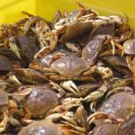 Yet Another Crab Season Opener Delay