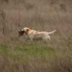 New Lawsuit Fights California Hunting Regulations Involving GPS Collars On Dogs