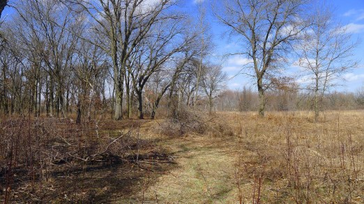 burned oak savanna to the left, prairie to the right