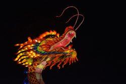 Contre-plongée de dragon Gaillac