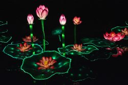 Lotus Gaillac