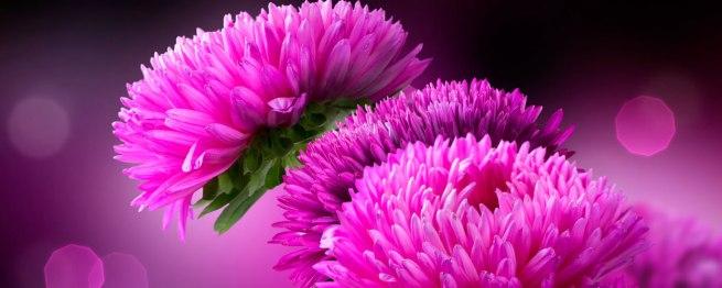 Grief Resources at Calvert Hospice