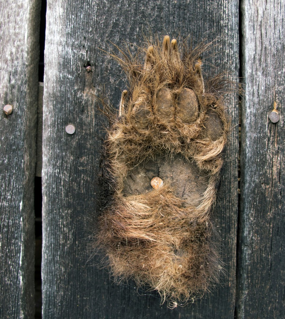 Bear Paw, North Georgia