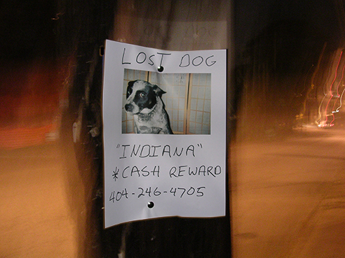 Lost Dog, Atlanta, GA