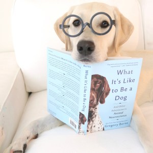 the book what its like to be a dog