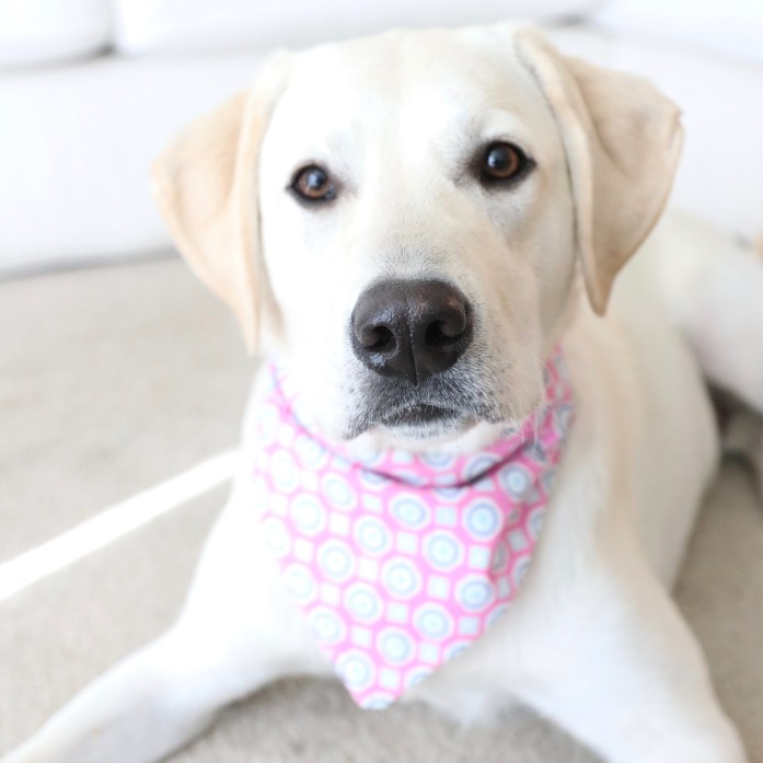homemade dog bandana. diy dog bandana. how to make your own dog bandana