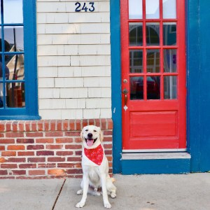 Dog sitting in front of a blue and red door in marblehead massachusetts