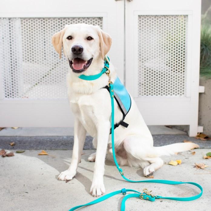therapy dog graduation