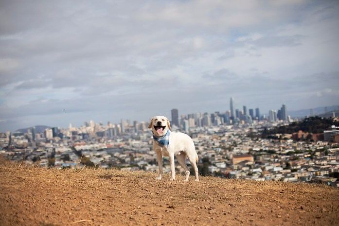 dog using the command stay in front of a city landscape