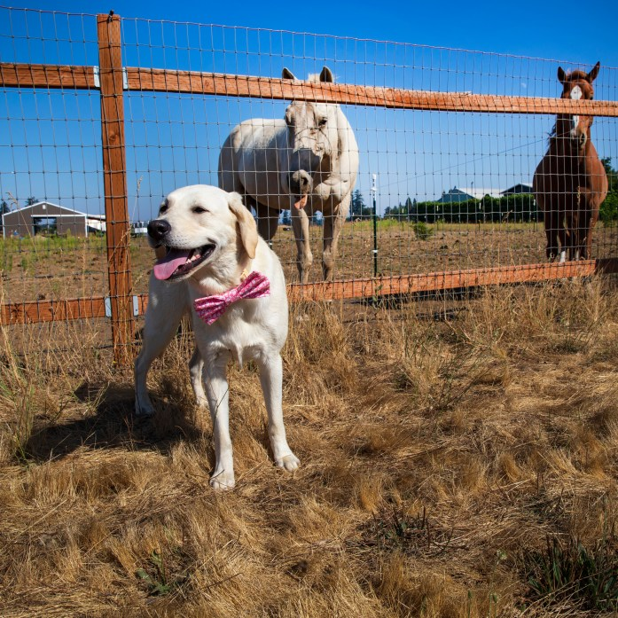 dog with two horses