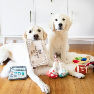 two dogs in front of plush toys shaped like diplomas