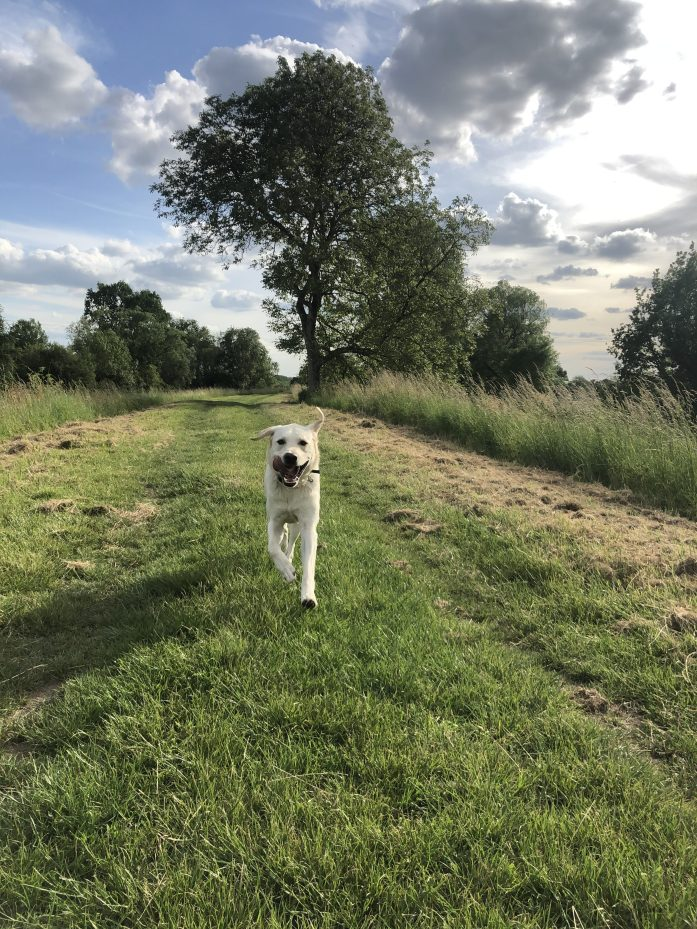dog friendly trails in the loire river valley french countryside