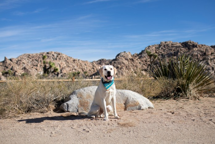 pet friendly joshua tree national park