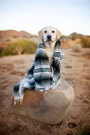 dog at joshua tree national park