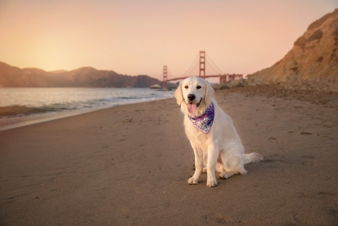 golden gate bridge lookout from dog friendly baker beach