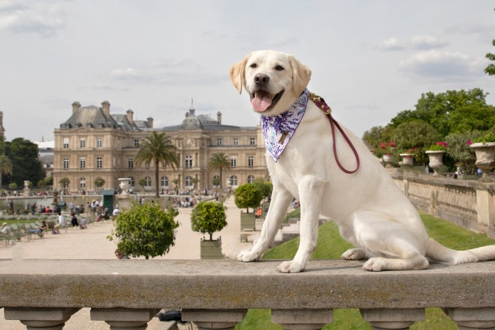 dog at luxembourg gardens in paris