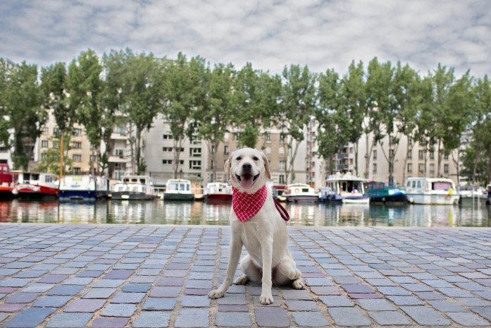dog sitting at basin de la villette