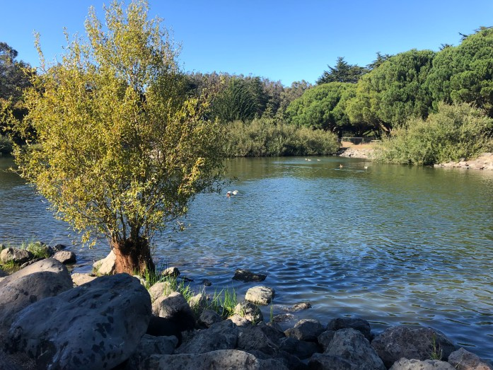 dog friendly lake in san francisco at mcclaren park