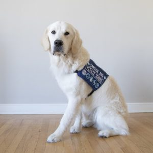 What is a Service Dog? (Frequently Asked Questions)
