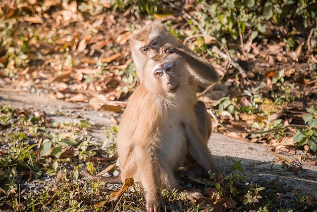prolattina_scimmia