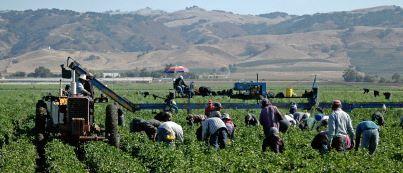 Migrant farm labor