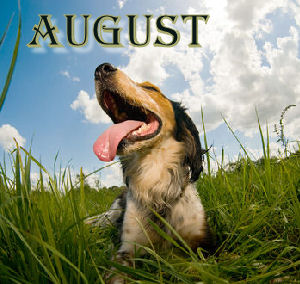 """August Is """"Dog Days Of Summer"""" Month"""