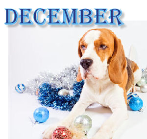 """December Is """"Reason for 'paws': Think About Pet Safety"""""""