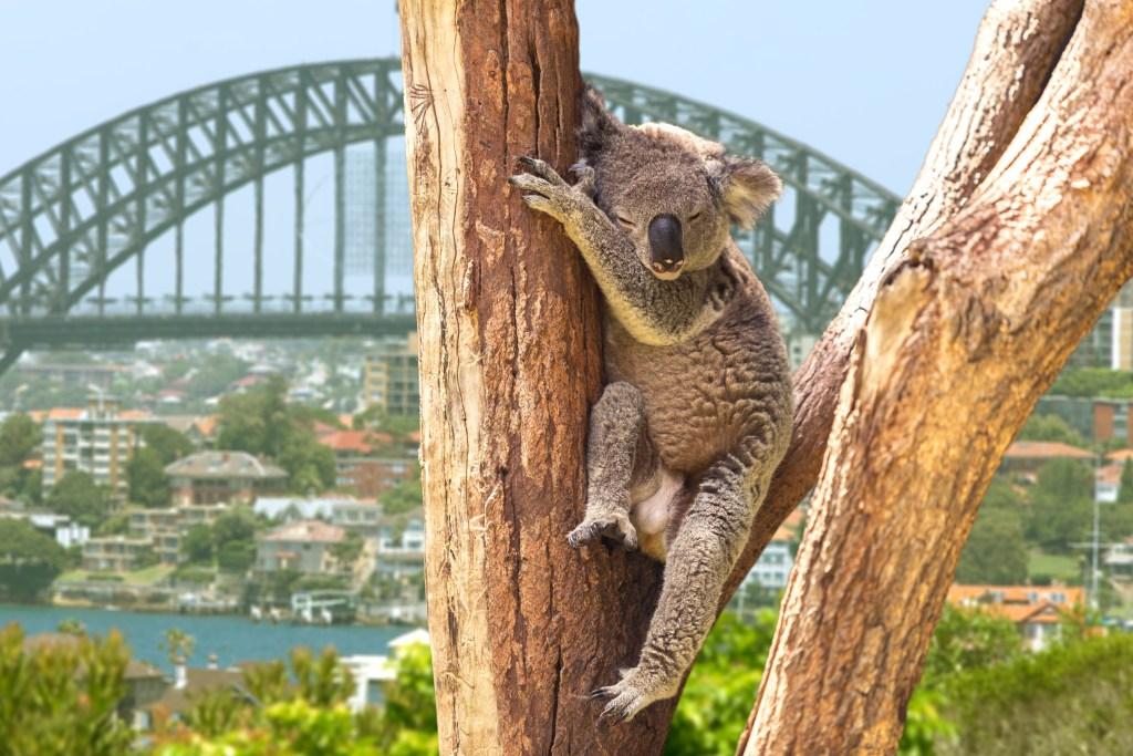 Aprenda Cultura australiana con Cambly