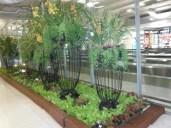 fine-vegetation-at-bangkok-airport