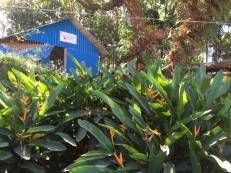 19-jan-turtle-garden
