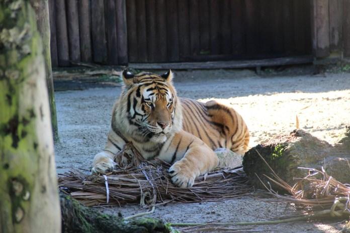 O Zoológico de Balneário Camboriú no Parque Cyro Gevaerd