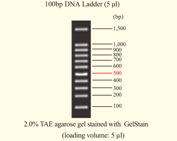 DNA Ladder 100bp