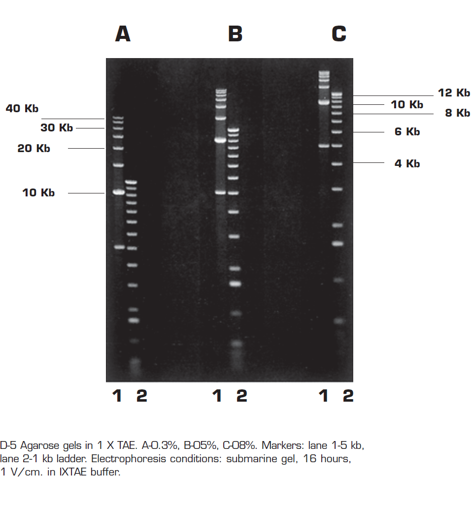 Very high gel strength Agarose (D5)