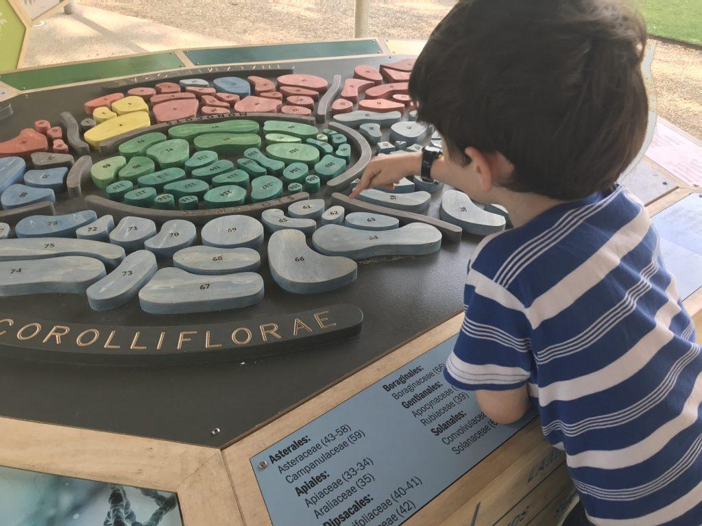 child with plant exhibit