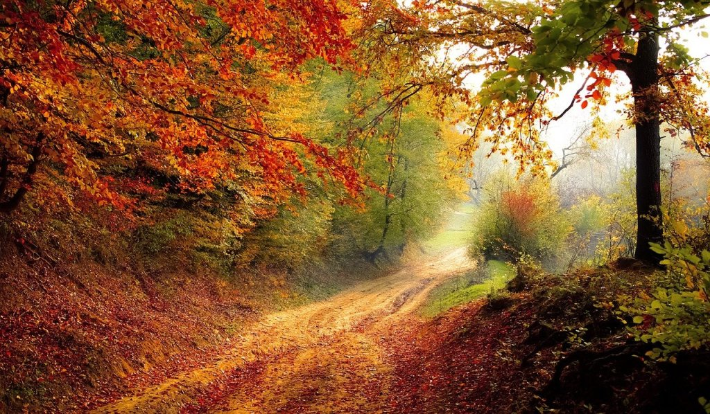 road, forest, fall-1072823.jpg