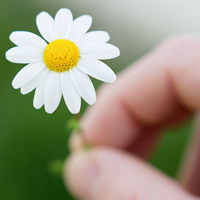 As fresh as a daisy: using similes in English.