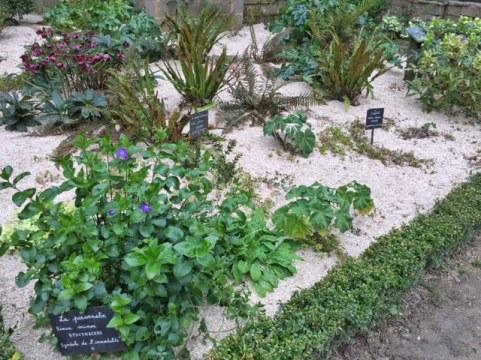 lehon_dinan_abbaye_enclos_plante_medicinales